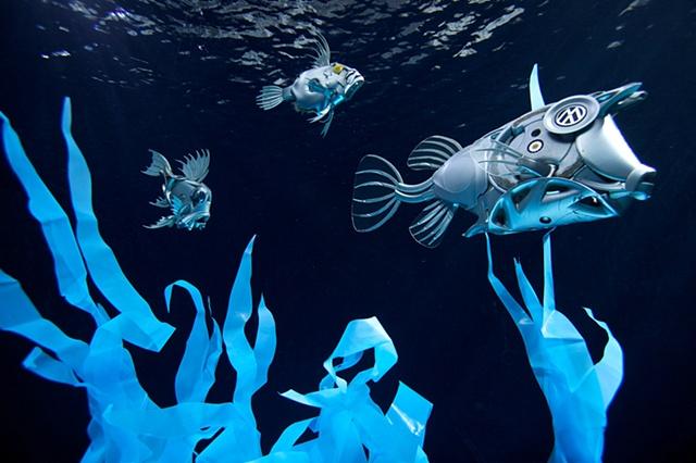 Hubcapfish