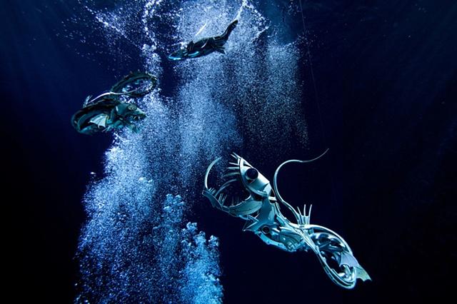 Hubcap Fish