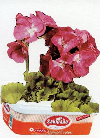 Elcin Marasli, yogurt, turkish traditions, turkich culture, geranium, greek yogurt, turkish yogurt