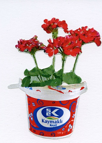 Elcin Marasli, yogurt, turkish traditions, turkich culture, geranium, greek yogurt, turkish yogurt