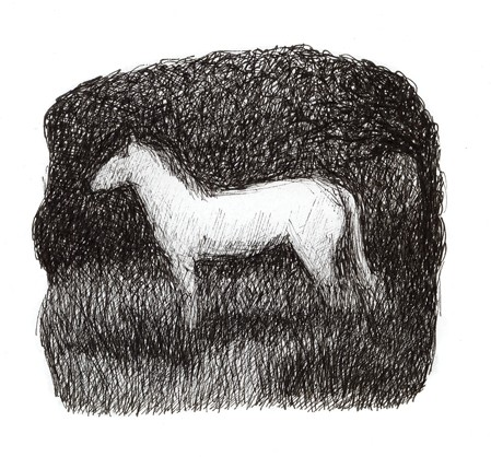White horse standing in field