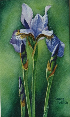 Iris Siberian Blue-Framed