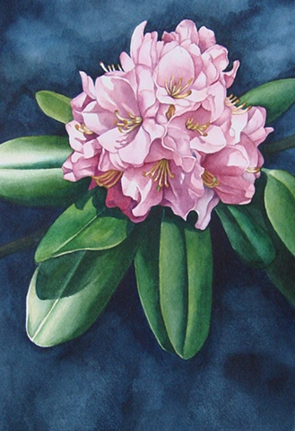 Rhododendron-Pink Unframed