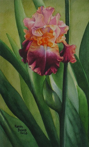 Iris Peach Purple-Framed