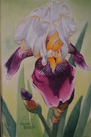 Yellow Purple Iris-Framed