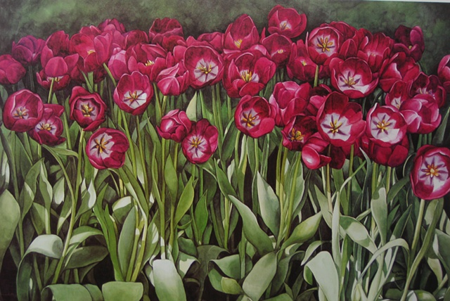 Longwood Tulips-Print Only