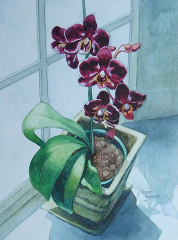 Orchids with Window-Framed