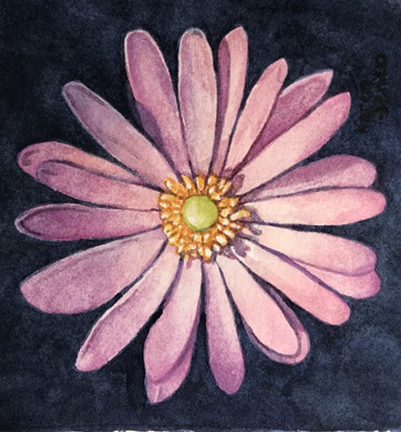Light Purple Daisy