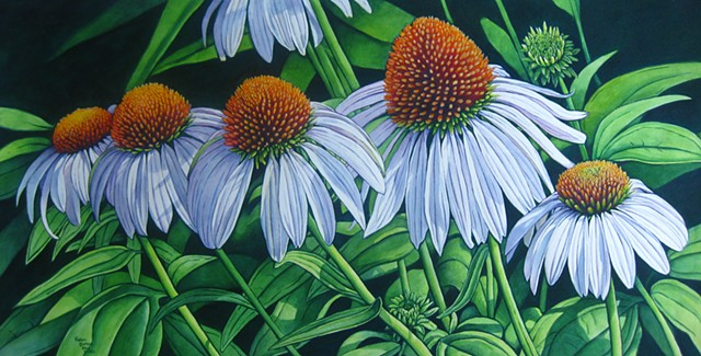 White Coneflowers-Framed
