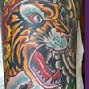 First Nation Japanese Tiger