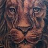 Lion Astrology