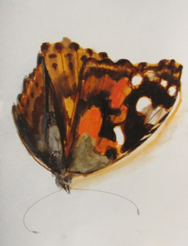 Butterfly Study 2