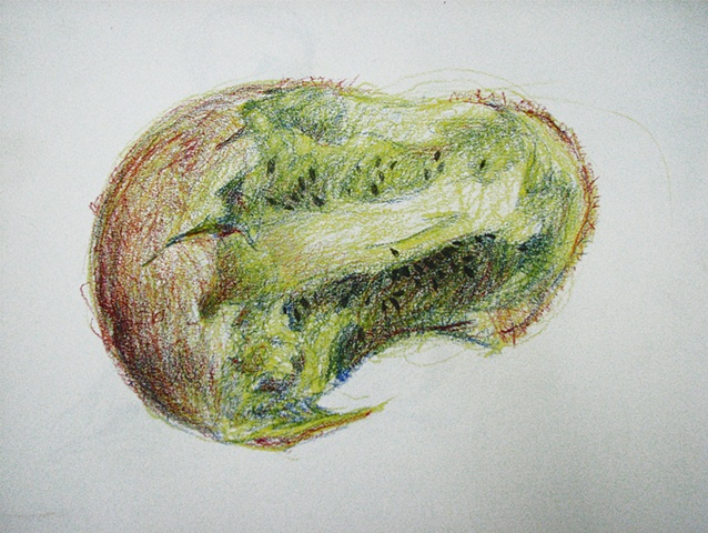 drawing of bitten kiwi fruit by Chris Mona
