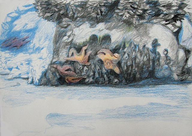 drawing of sea stars, sea urchins, and mussels in a tide pool on the Oregon coast by Chris Mona