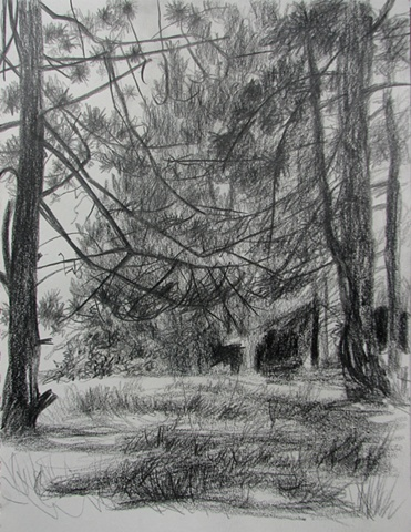 drawing of pine grove  at Dolly Sods, WV, by Chris Mona