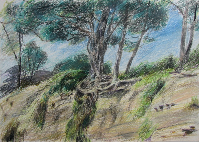 drawing of New Brighton Beach State Park, Ca by Chris Mona