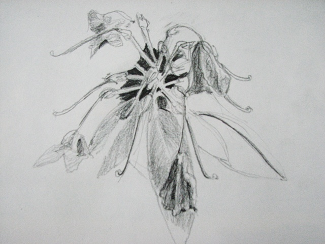 drawing of rhododendron with dying flowers by Chris Mona