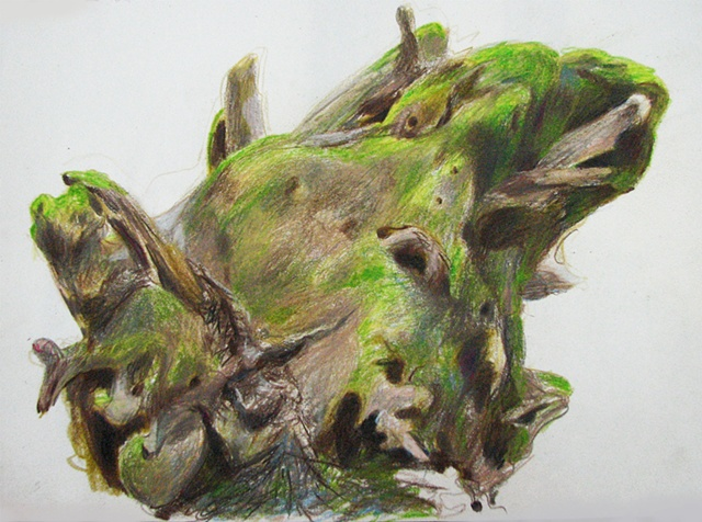 drawing of moss-covered redwood stump by Chris Mona