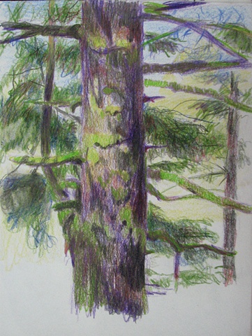 drawing of spruce tree at Alder Dunes, Oregon, by Chris Mona