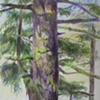 Spruce Tree, Alder Dunes, OR, from Sketchbook No. 20