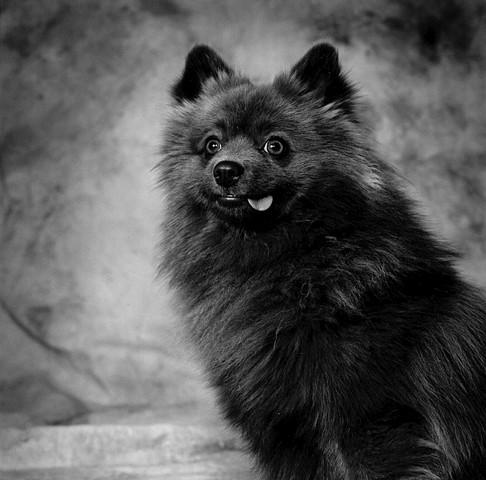 Photograph of dog, fine art, fine art print, Steamboat Springs, Colorado by JoAnn Baker Paul