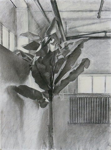 Large Plant in an Industrial Space