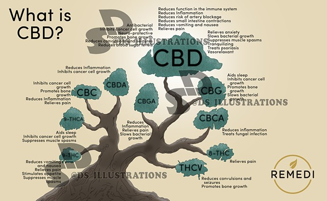 Remedi Plus Blog Illustration for CBD research