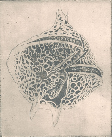 sea, life, forms, cell, earth, water, specimen, nature  intaglio printmaking by brigitte caramanna