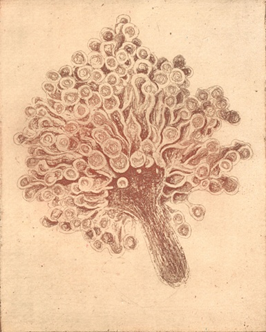 etching, brigitte caramanna, art, red, natural, intricate, delicate, specimen, cellular, cells, life, simple, form, life, nature, intaglio printmaking by brigitte caramanna