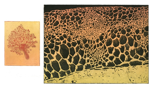 cells, volcano, landscape, nature, art, specimens, atmospheres intaglio printmaking by brigitte caramanna