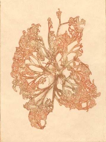 Picture of Brigitte caramanna, brigitte caramanna, art, intaglio, nature, emerging artist, starfish, water, sea, butterfly, star, ocea, sea, creature, specimen, form, life, printmaking by brigitte caramanna