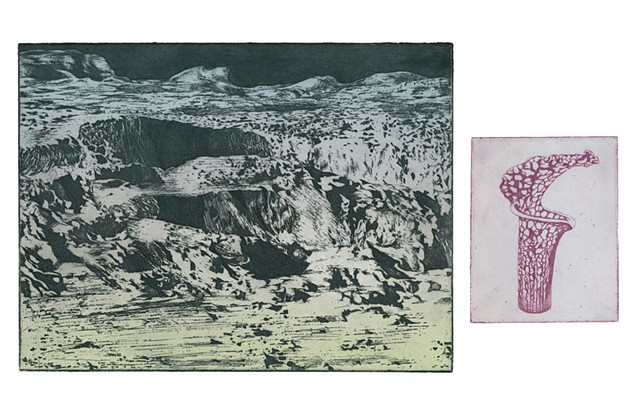 Brigitte Caramanna, nature, sarracenia, art, moon, space, craters, plant, life intaglio printmaking by brigitte caramanna