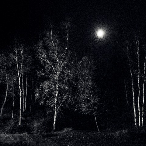 PHotograph of Moon, Trees, Maine, Night, Black and White, by Judith Ebenstein