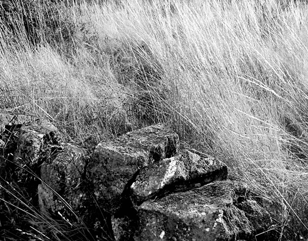 Rocks and weeds