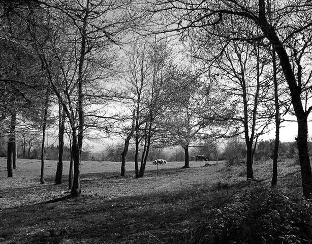 Pasture in spring, Galicia