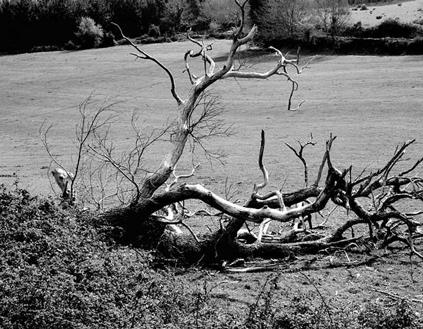 Fallen Beauty, Galicia