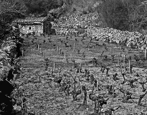"""Vineyard with Shed - 2""  Small vineyards such as this one are very common in Galicia.These vineyards become beehives of activity during vendimia (grape harvest)."
