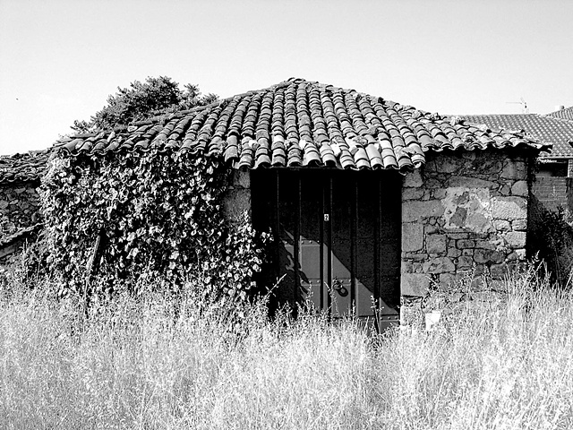 """Farm House With Weeds""  Many farm houses such as this one have been unkept for a long time. Yet the beauty of the scenery is unmistakable."