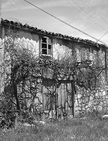 Old house with grape arbor