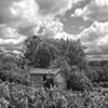 """Vineyard with Shed""  A small vineyard with tool shed"