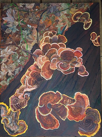 Coral  Tree Fungus  collage: closeup from personal photographs on the Appalachian Trail