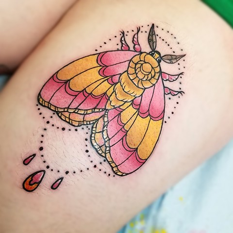 Rosy Maple Moth Tattoo