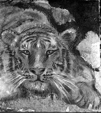 tiger wild cat feline jungle art nature