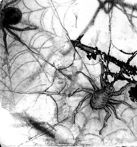 spider web arachnid art grawing