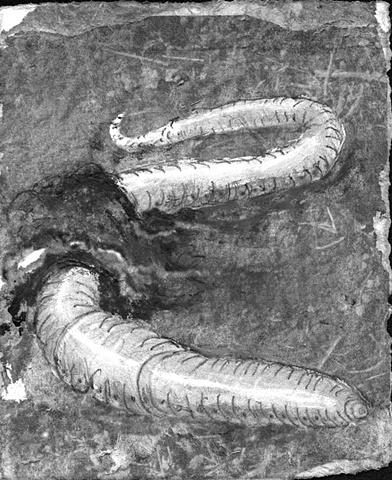 worm eartheworm burrow dirt earth art
