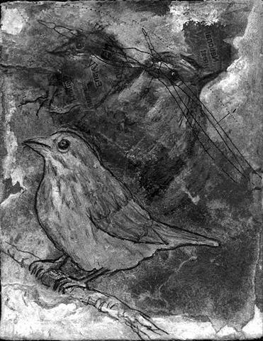 sparrow bird ava songbird wild flock art