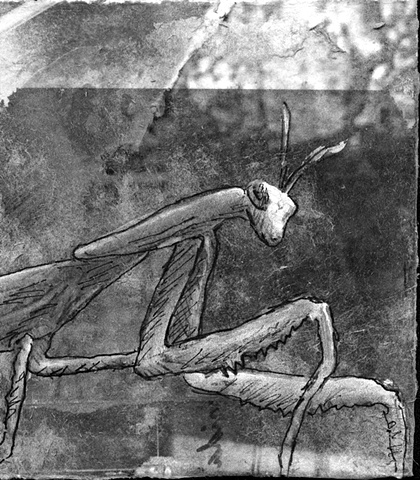 praying mantis insect nature bug drawing art