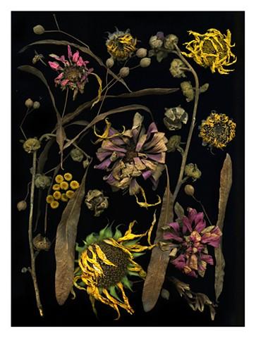 Sunflower with zinnias