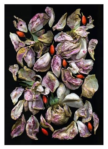 Rose Petals and Hips