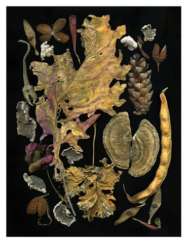Fungi and Cruciferae Leaf